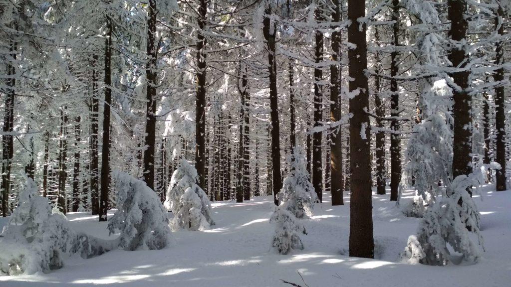Zimowo na Radziejowej