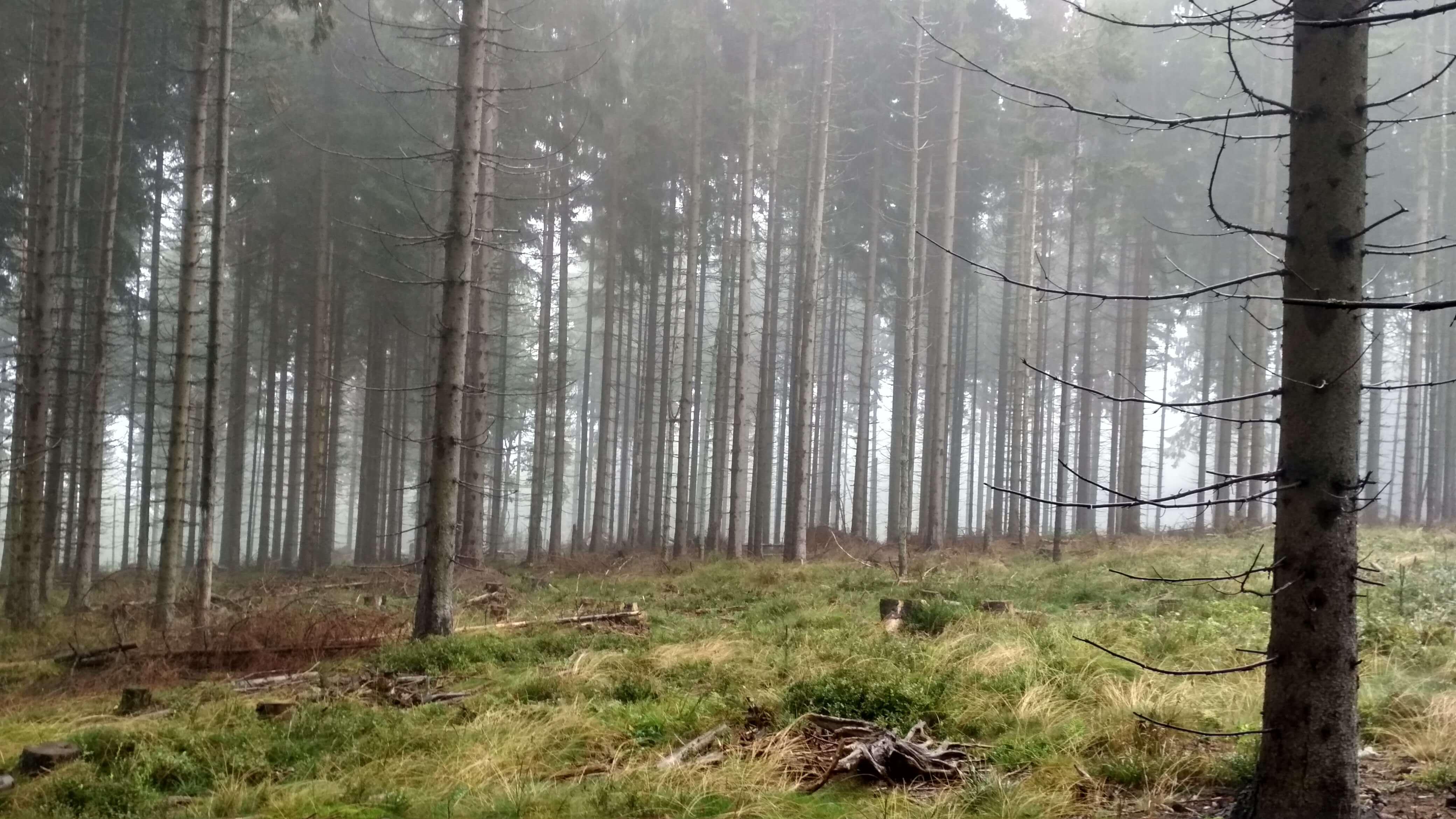 Drzewa od linijki