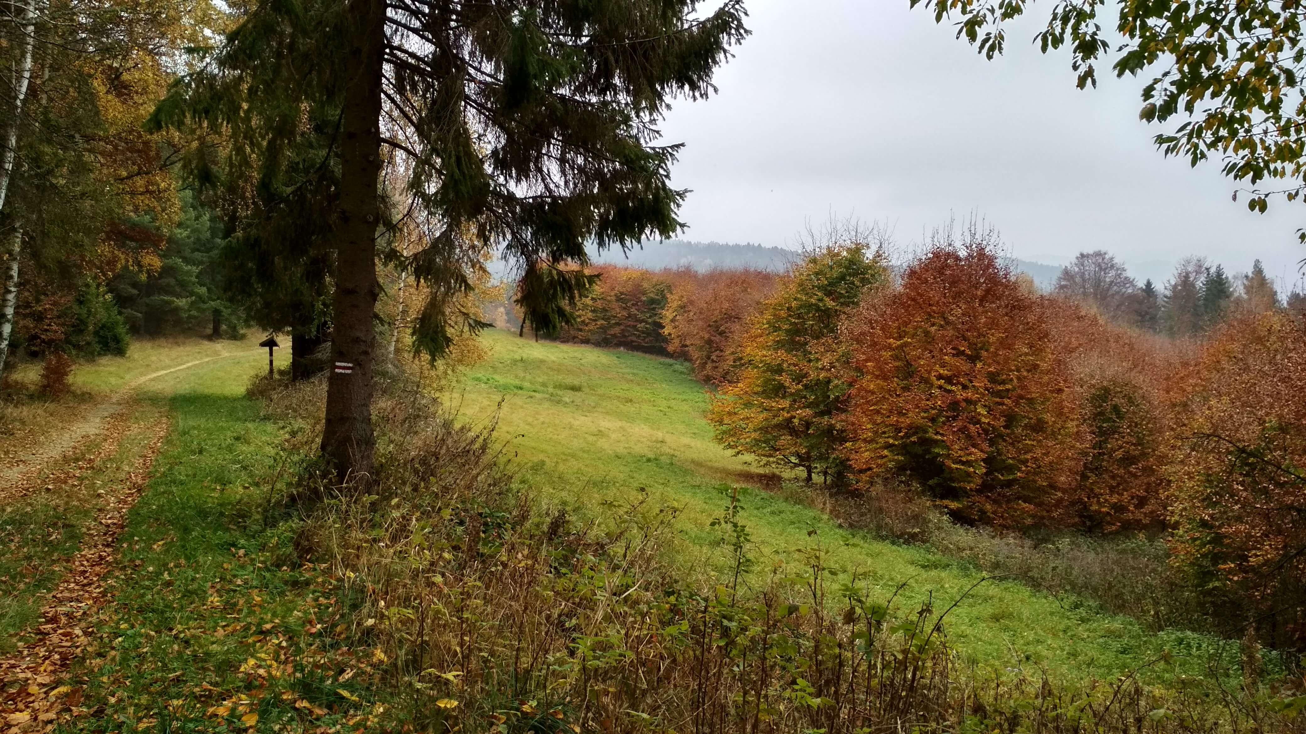 Piękna jesień w Beskidzie Sądeckim
