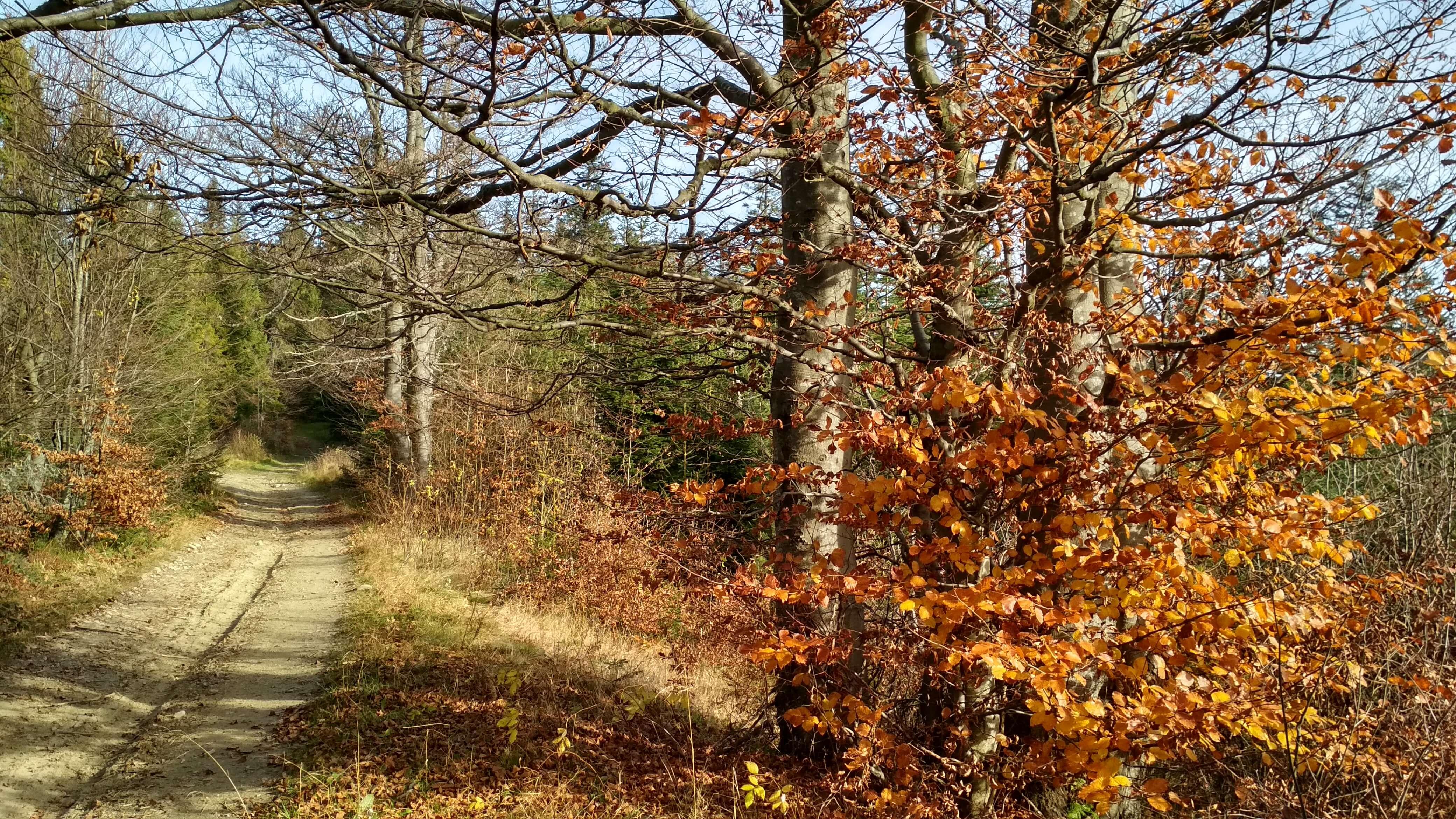 Gorce i jesień