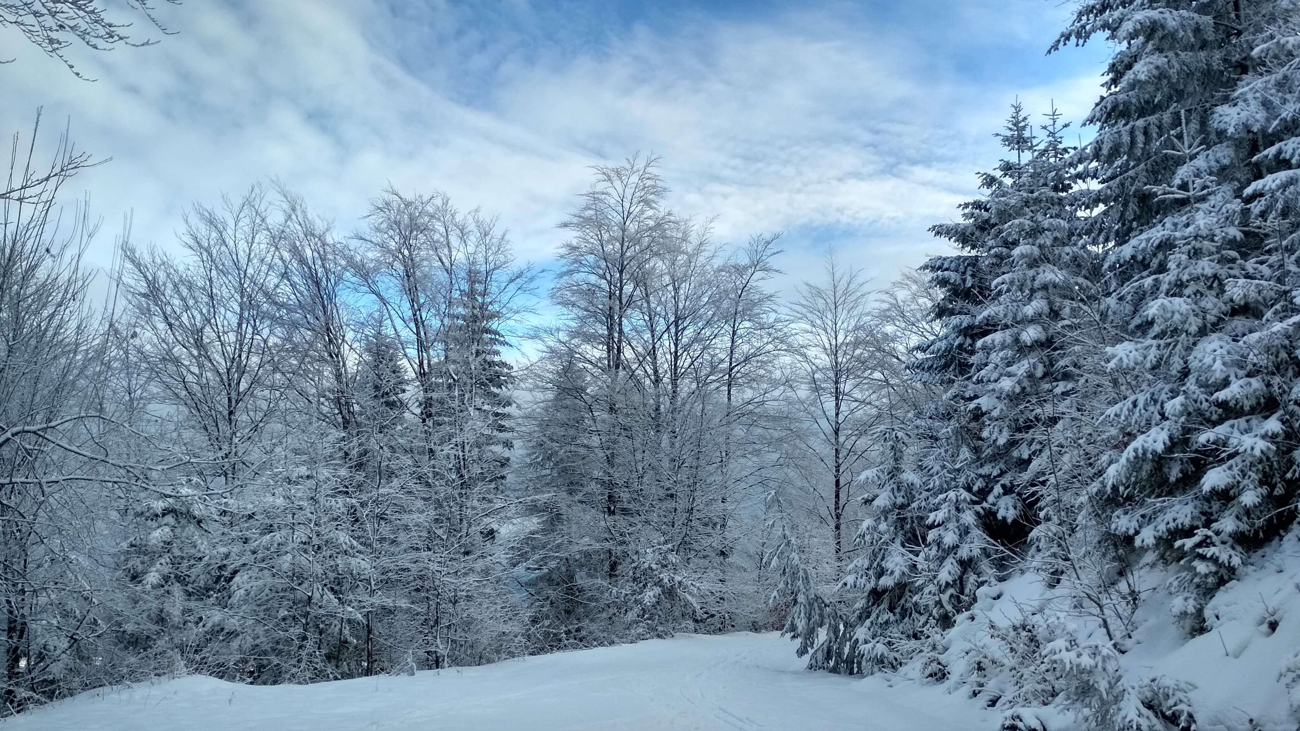 Przecinamy trasę narciarstwa biegowego