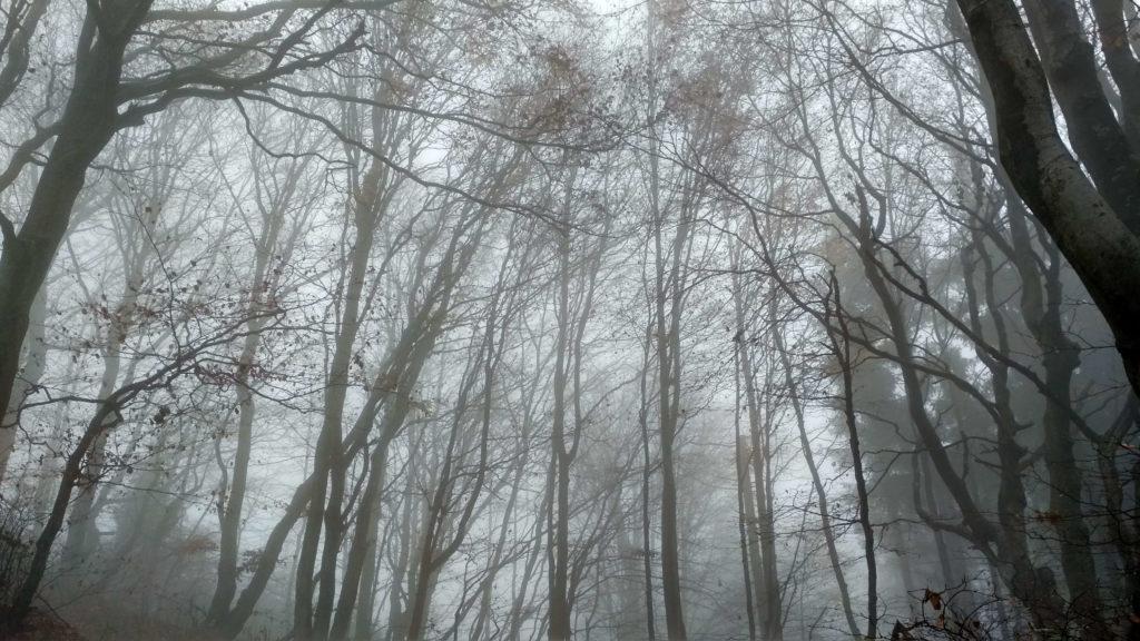 Mgły w drodze na Jaworzynę