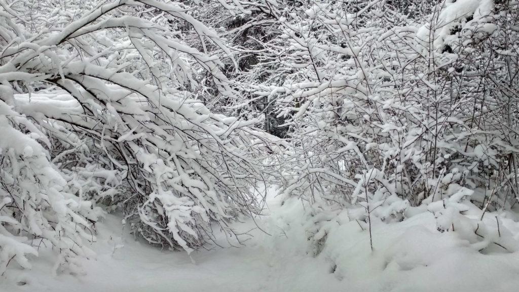 Robi sie zimowo!