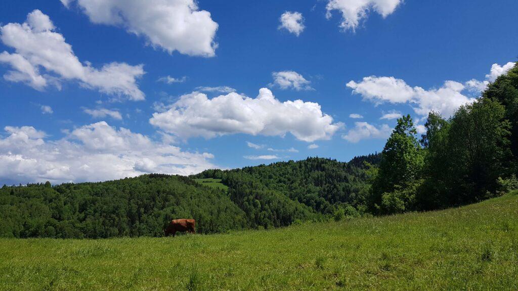 Polana na niebieskim szlaku z Ochotnicy na Lubań
