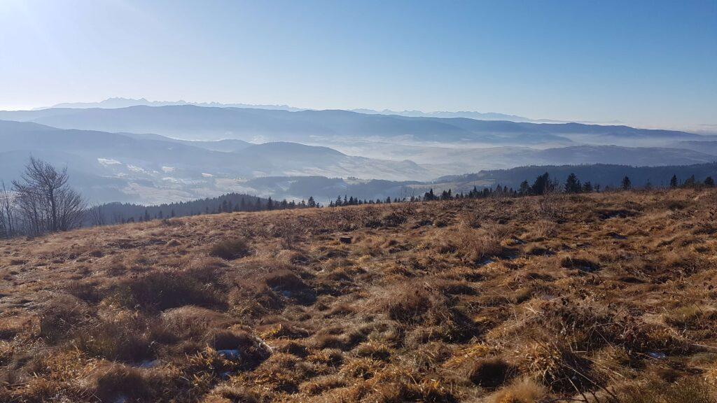 Polana na szczycie z widokiem na Tatry, ćwilin